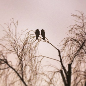 Birds telling